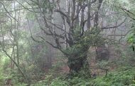 barcelos comemora dia da floresta autóctone com...
