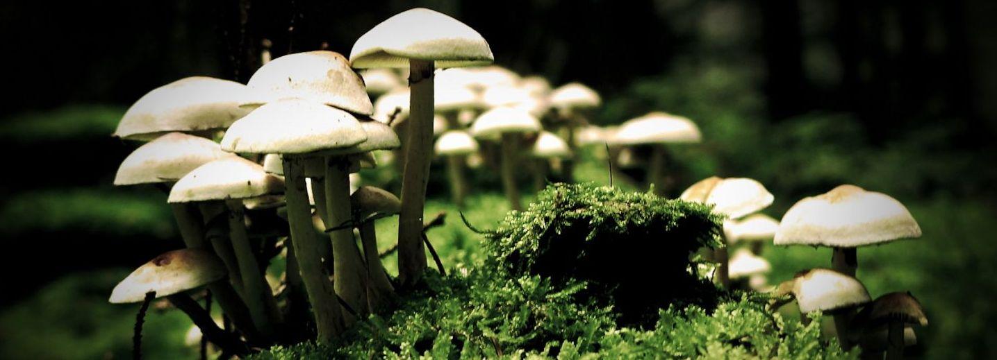 Município promove formação sobre produção doméstica de cogumelos