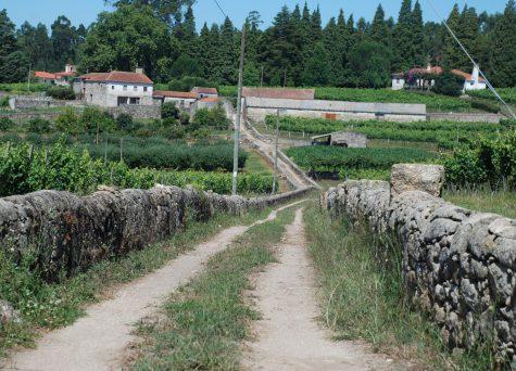 Pelos caminhos do Monte da Saia – PR2 BCL