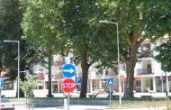 câmara municipal substitui árvores que represen...