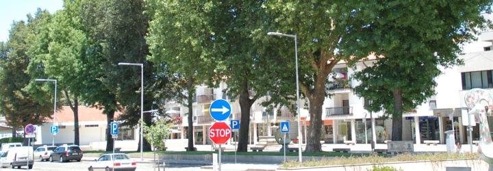 Câmara Municipal substitui árvores que representem problemas de segurança