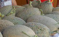 município realiza feira do melão na avenida da ...