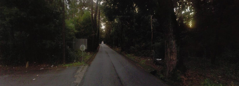 Trânsito cortado em Palme devido a abate de árvores
