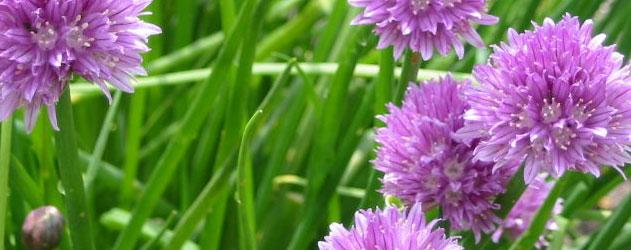 Município promove segunda edição da formação sobre plantas aromáticas e medicinais