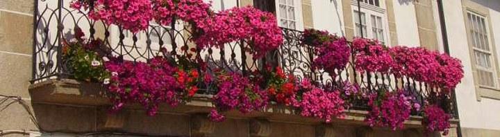 Concurso Barcelos Florido está de volta e promete perfumar as ruas da cidade