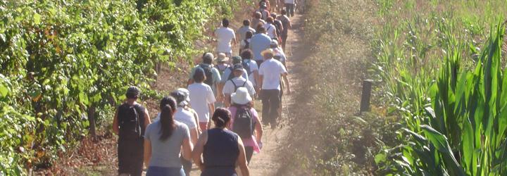 Caminhar para Conhecer o Caminho de Santiago