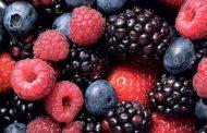 formação sobre frutos silvestres - alteração de...