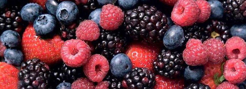 Formação sobre frutos silvestres - Alteração de data