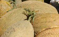v feira do melão casca de carvalho foi um sucesso