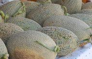 câmara municipal promove feira do melão na aven...