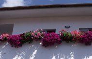 concurso de flores embelezou a cidade