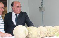 município promoveu melão casca de carvalho numa...