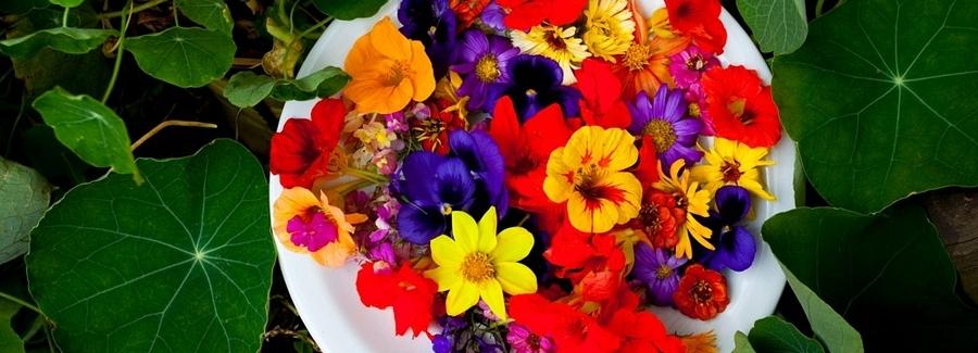 Aprenda tudo sobre Flores comestíveis