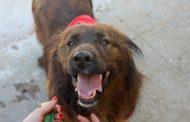 Câmara de Barcelos proporciona condições para a adoção e esterilização de animais