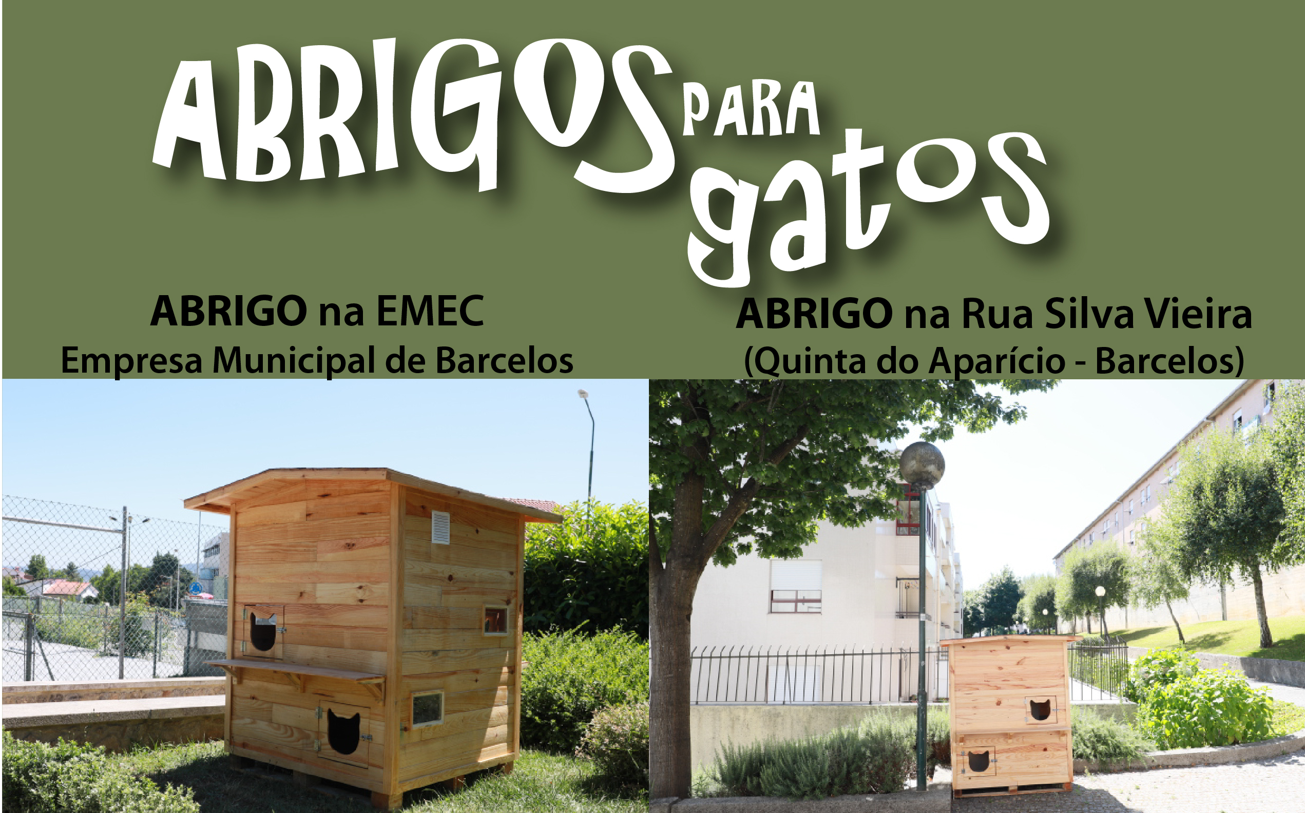 Município de Barcelos cria abrigos para controlar colónias de gatos