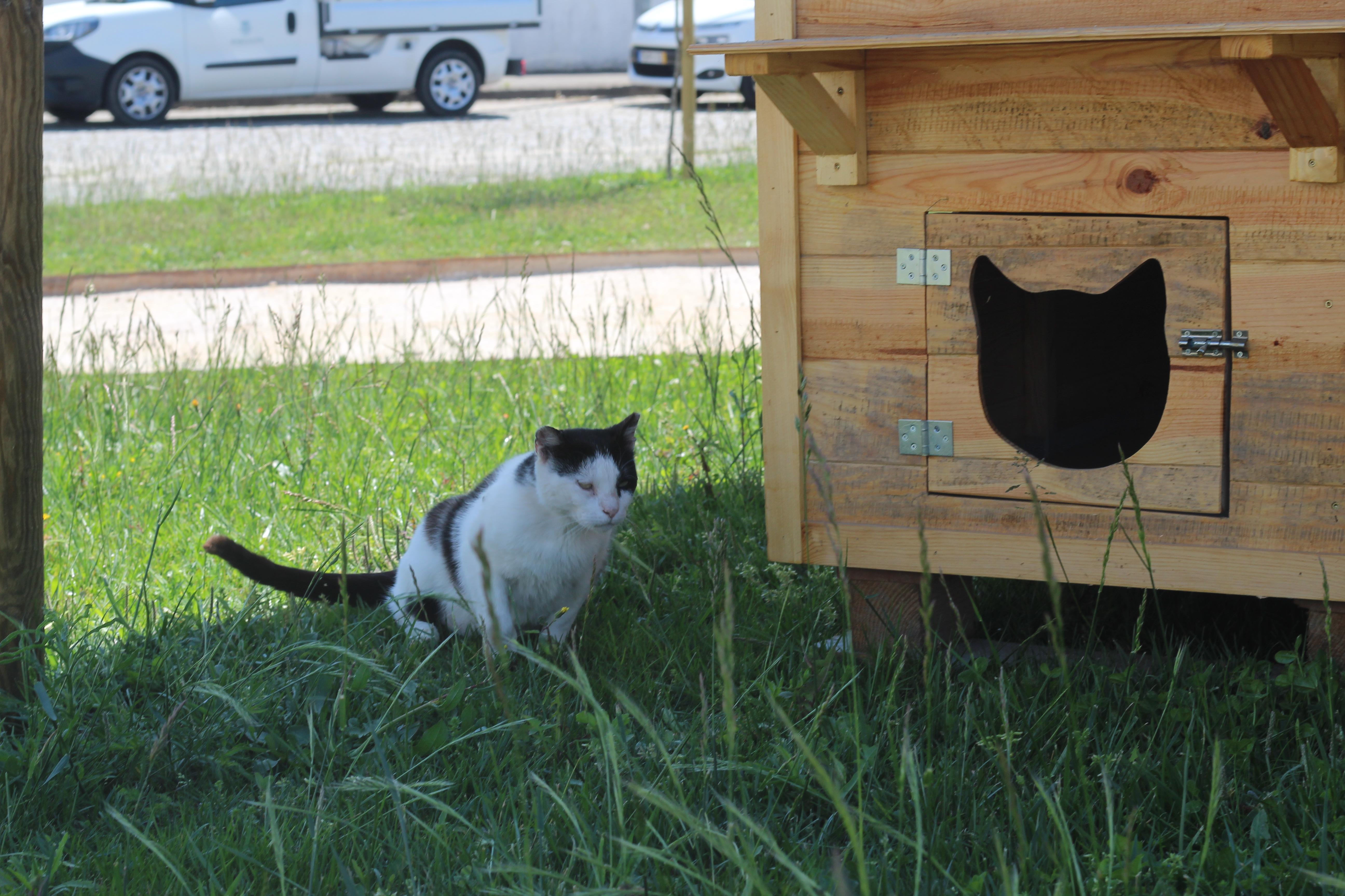 Município de Barcelos cria dois novos abrigos para controlar colónias de gatos